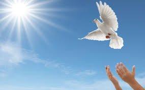Releasing a White Dove